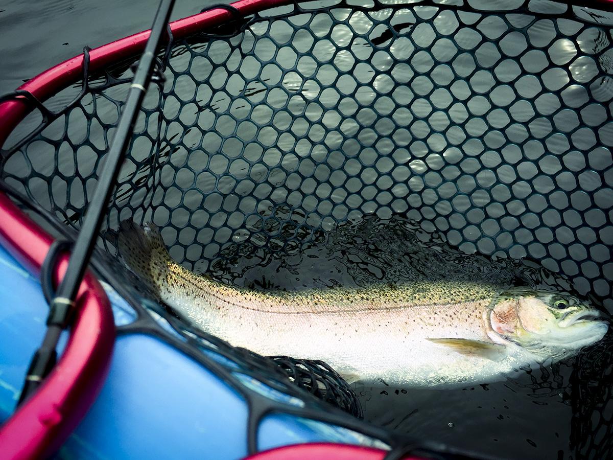 東古屋湖、デカ鱒釣りに行ってきました!