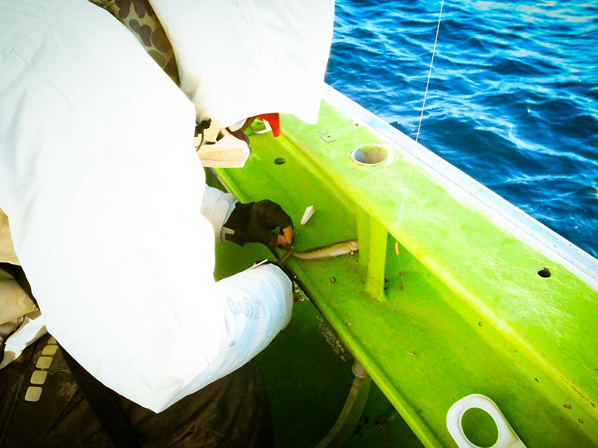 念願のカワハギ釣り!そして・・
