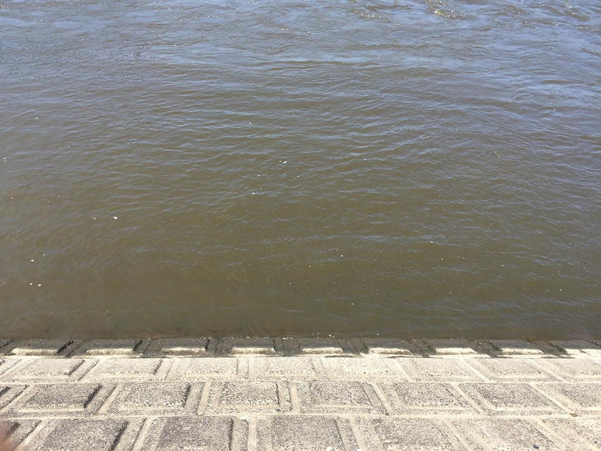 〜巨魚を求めて〜ハクレン調査隊、利根川へ出撃!